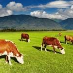 органско сточарство