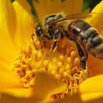 Опрема у пчеларству
