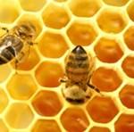 кошнице пчела